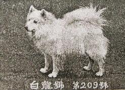 hakuryu-go