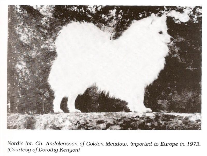 andoleasson-of-golden-meadow